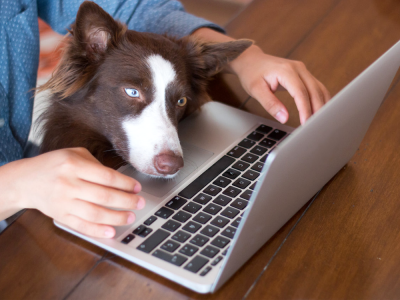 online vet advice for dogs